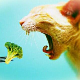 Записки вегетарианца