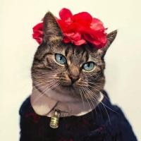 Модная Кошка