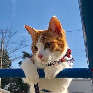 В мире животных (Коты, собаки)