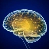 мозгОника