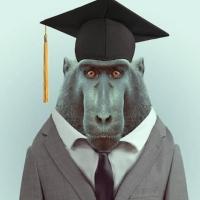 Обезьяна хочет в колледж
